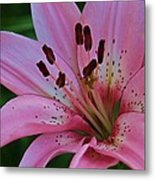 From My Flower Garden Metal Print by Victoria Sheldon