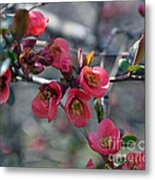 From Quince I Came Metal Print