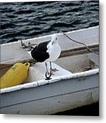 From Rockport Ma A Seagull Chilling Out In A Rowboat Metal Print