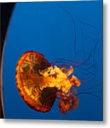 From The Deep - Jelly Fish Metal Print