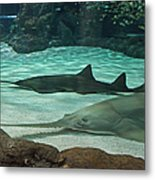 From The Deep - Sawtooth Ray Sharks Metal Print