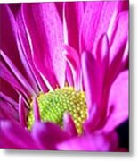 From The Florist Too Metal Print
