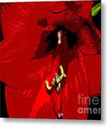 Front And Center Metal Print