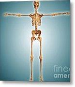 Front View Of Human Skeletal System Metal Print