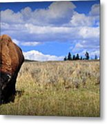 Frontview Of American Bison Metal Print