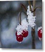 Frost Berries Metal Print