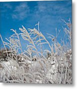 Frost Covered Grasses Against The Sky Metal Print