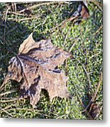 Frost Covered Leaf Metal Print