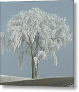 Frost Covered Lone Tree Metal Print