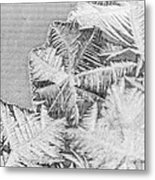 Frost In Black And White Metal Print by Dana Moyer