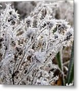 Frost In The Field Metal Print