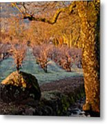 Frost In The Valley Of The Moon Metal Print