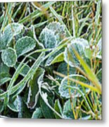 Frost On Strawberry Leaves Metal Print