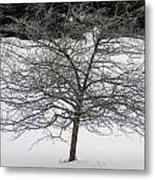 Frost On The Hawthorne Metal Print