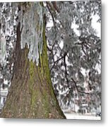 Frost On The Leaves Metal Print