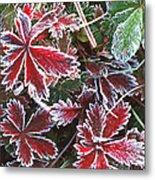 Frost On Wild Strawberry Metal Print