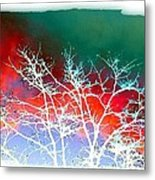 Frost Shrouded Tree Metal Print