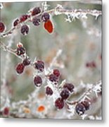 Frosted Berries Metal Print
