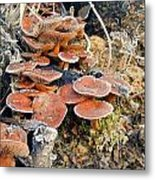 Frosted Cascading Mushrooms Metal Print