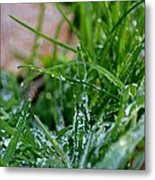 Frosted Dew Metal Print
