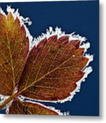Frosted Leaf Metal Print