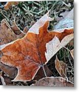Frosted Leafs Metal Print