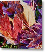 Frosted Leaves #2 - Painted Metal Print
