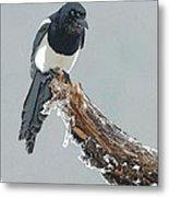 Frosted Magpie- Abstract Metal Print