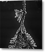 Frosted Pine Branch Metal Print