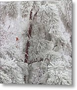 Frosted Pines Metal Print