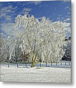 Frosted Trees - Newton Road Park Metal Print