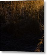 Frosted With Sun Metal Print