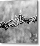 Frosty Barb Wire Metal Print
