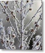 Frosty Field Plant Metal Print
