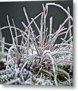 Frosty Grass Metal Print by Karen Grist