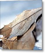 Frosty Leaves In The Morning Sunlight Metal Print
