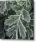 Frosty Leaves Macro Metal Print