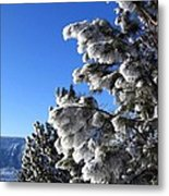 Frosty Limbs Metal Print