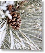 Frosty Norway Pine Metal Print
