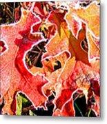 Frosty Oak Leaves Metal Print