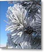 Frosty Pine Cone 2 Metal Print