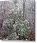 Frosty Pine Metal Print