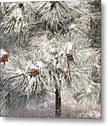 Frosty Pinetree Metal Print