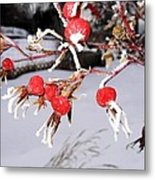 Frosty Rosehips Metal Print