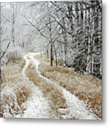 Frosty Trail Metal Print