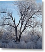 Frosty Trees 3 Metal Print