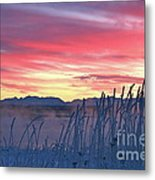 Frosty Winter Sunrise Metal Print