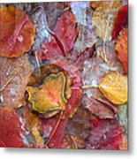 Frozen Autumn Aspen Leaves Metal Print