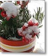 Frozen Christmas Flowers Metal Print