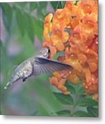 Frozen Hummingbird Metal Print